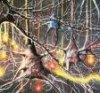 Японские специалисты вырастили клетки коры головного мозга человека, которые начали самостоятельную нервную деятельность