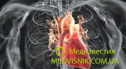 Японские ученые вырастили живое сердце из стволовых клеток